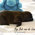 2015-04-19 15 bob