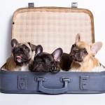 de drie pups uit ons A-nest
