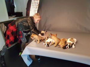 franse bulldog, franse bulldog pups, franse bulldog pups 2017, franse bulldog pups met stamboom, franse bulldogs met langere neus, gezonde franse bulldogs, hawbucks